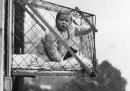 Едно от безумията на ХХ в. - бебешки клетки на прозореца