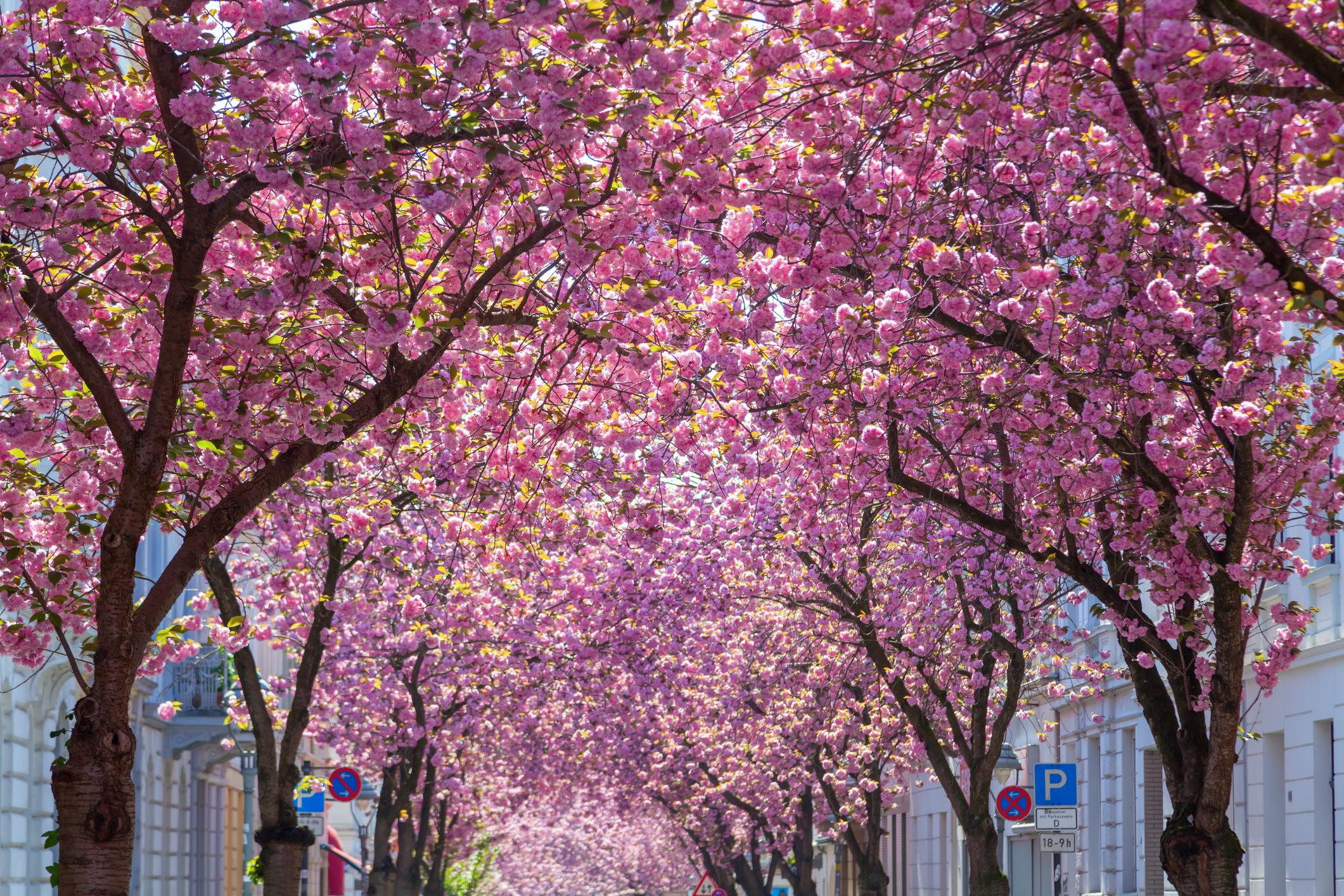 Бон, Германия