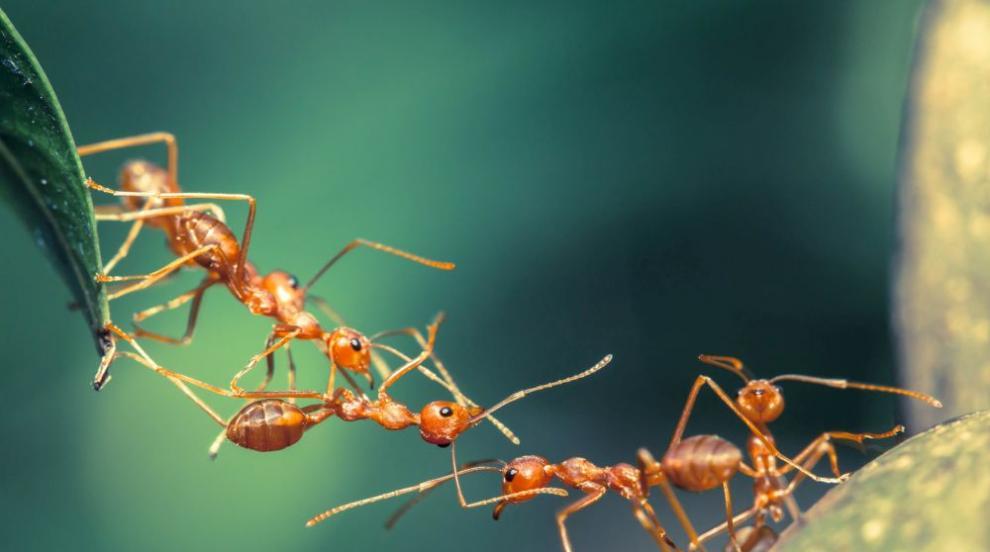 Eто как мравките избягват рисковете