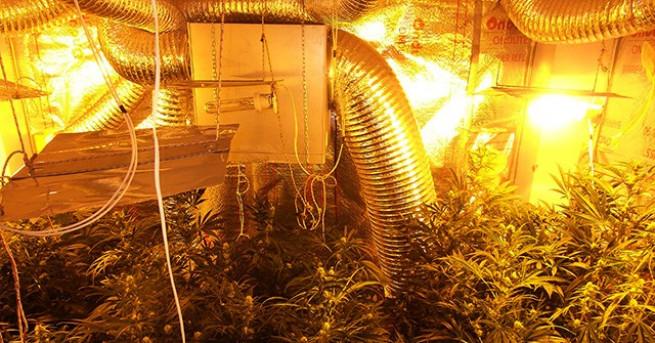 Видео от акцията на полицията в оранжерията за наркотици, която