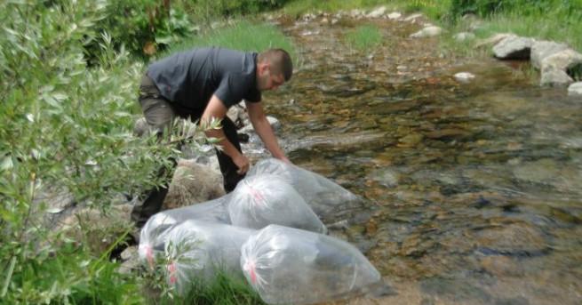 Река Вит е застрашена от екокатастрофа. За това сигнализираха от