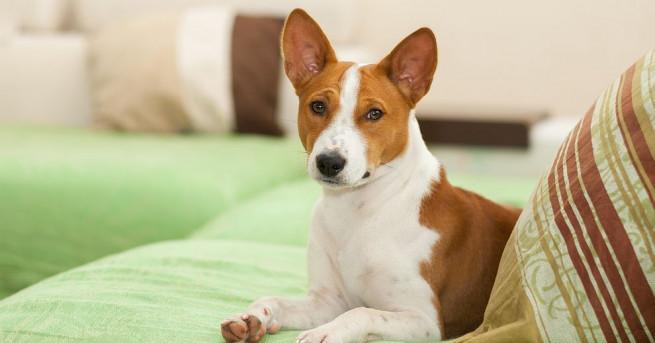 Великобритания отбелязва деня, в който кучетата могат да придружават стопаните