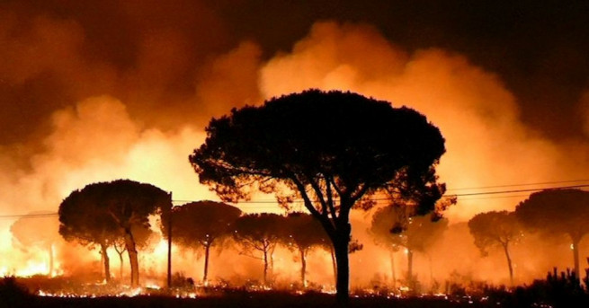 Снимка: Евакуираха хиляди заради пожар в природен парк в Испания