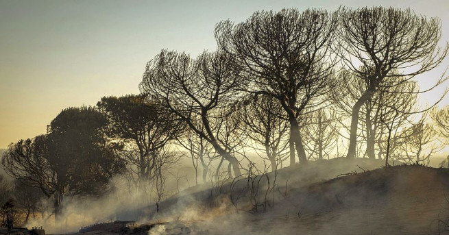 Снимка: Пожар бушува в природен парк в Испания
