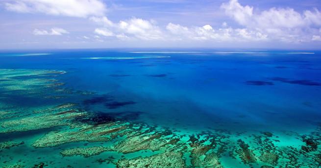 Големият бариерен риф в Австралия се оценява на 56 млрд.