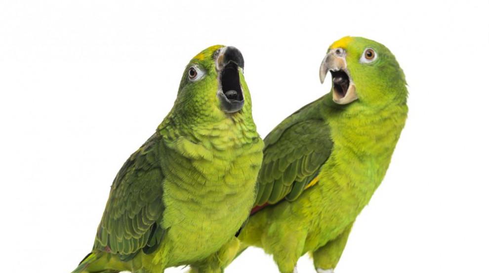 Откриха нов вид папагал в Мексико (СНИМКА)
