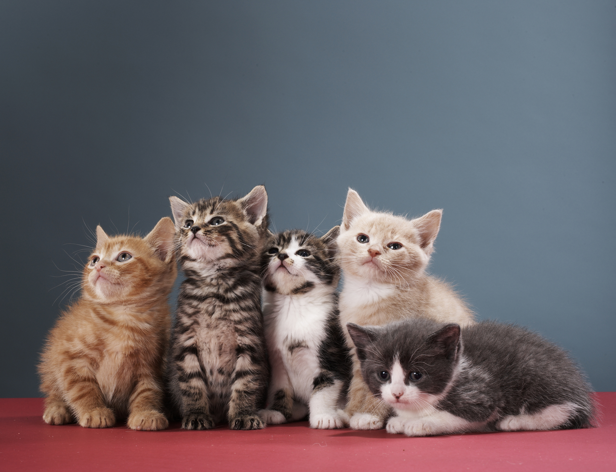 Токсоплазмозата се разпространява от котки и може да съществува скрита в човешкото тяло в продължение на години. Токсоплазмозата се причинява от паразита Toxoplasma gondii, като заразяването става от котешки фекалии или урина. Паразитът не може да премине през кожата, така че инфекцията обикновено влиза в човешкото тяло през устата или отворена рана. Болестта обикновено преминава леко, но може да доведе до усложнения при бременните жени и хората със слаба имунна система. Симптомите включват умора, мускулни болки, главоболие и треска, която може да продължи повече от месец При иначе здрави хора лечението продължава няколко месеца. Тежките случаи на токсоплазмоза обаче могат да причинят увреждане на мозъка, очите или други органи. Болестта често се активира години след инфектирането. За да се предпазят от токсоплазмоза собствениците на котки трябва да почистват добре след домашните си любимци и винаги да използват ръкавици и почистващи препарати при работа с котешки фекалии.