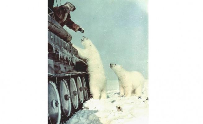 Войник храни полярни мечки от танк.