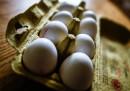 Скандал със заразени яйца в Европа