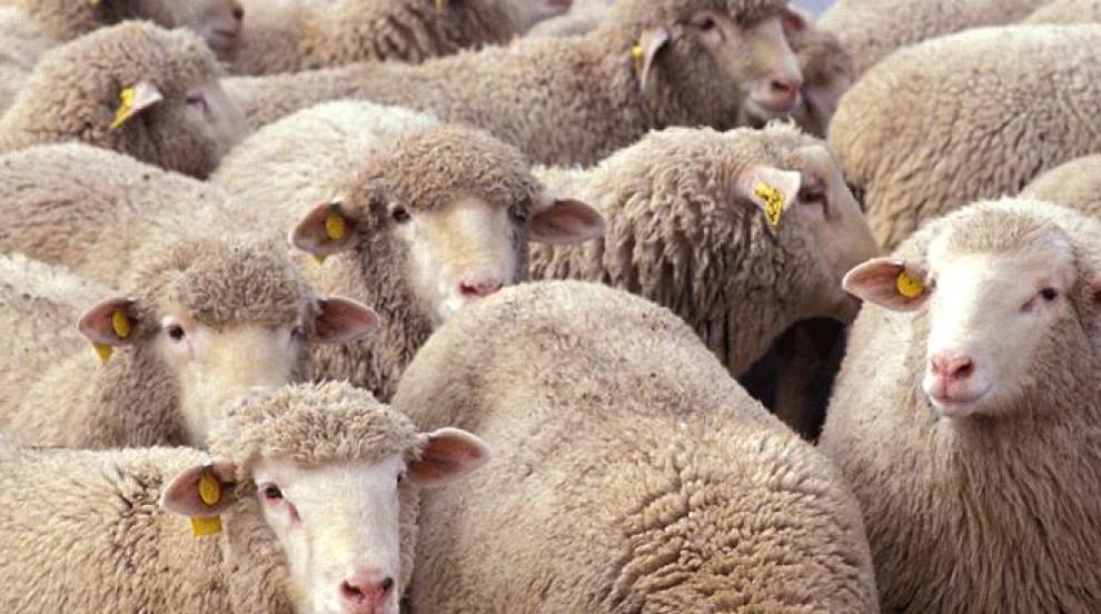 Обсъждат мерките за разпространението на чумата по животните в Пловдивско