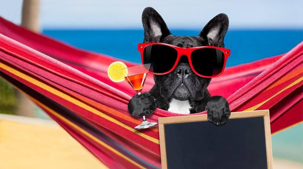Плажен бар за кучета в Хърватия (СНИМКИ/ВИДЕО)