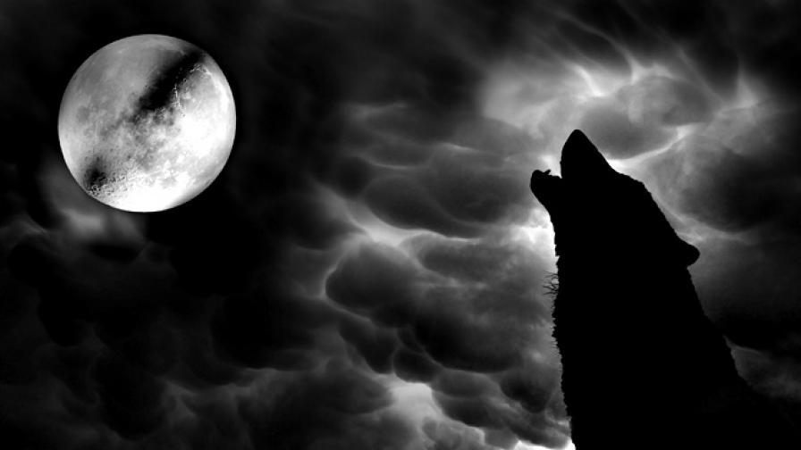 Големият страх в Европа през XVI в. - върколаците