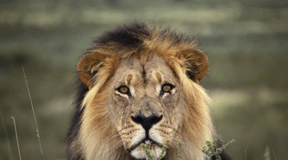 Диви животни загинаха при инцидент в южноафрикански парк