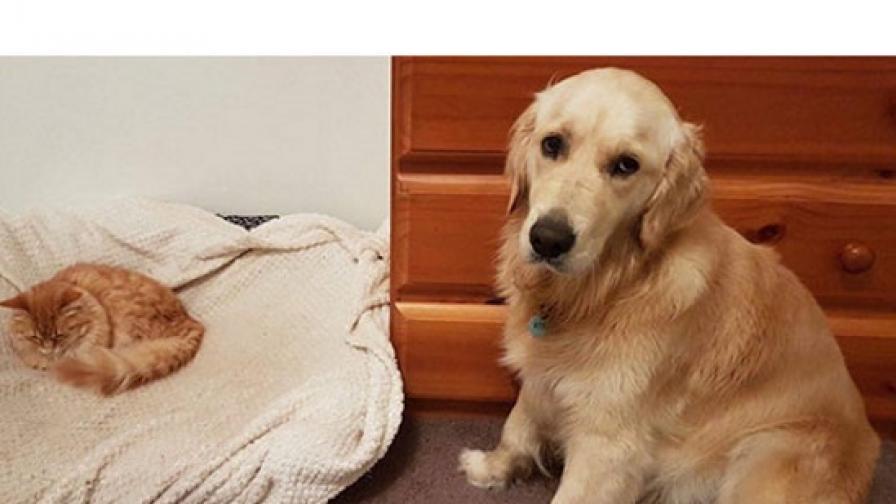 <p>Ето какво става, когато кучета и котки живеят в един дом</p>
