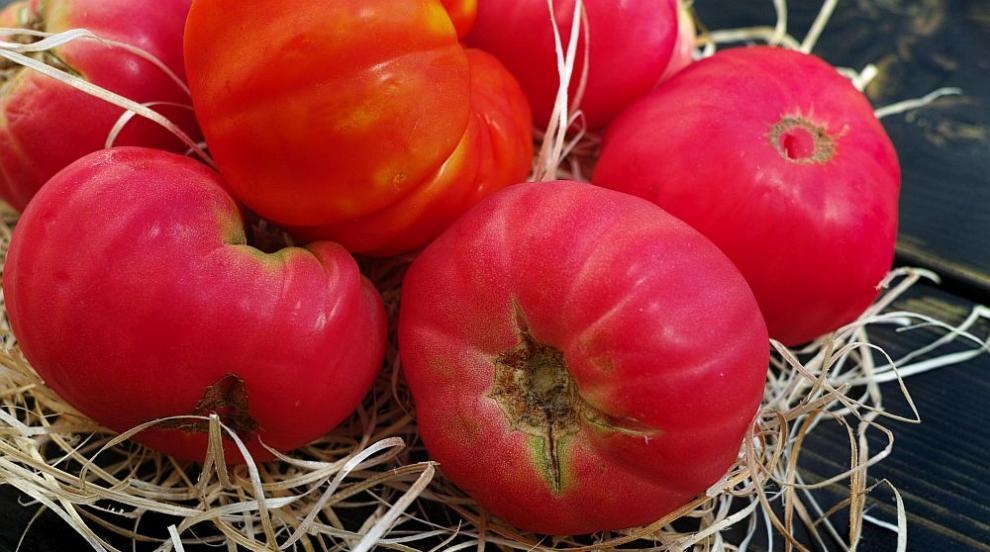 В България няма зараза от вируса на кафяво набраздяване по плодовете на...