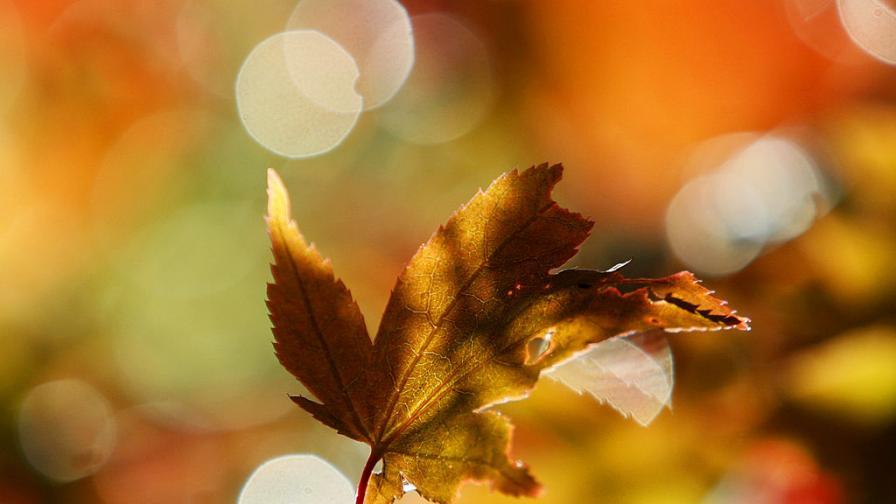 Как есенните цветове ни правят по-щастливи