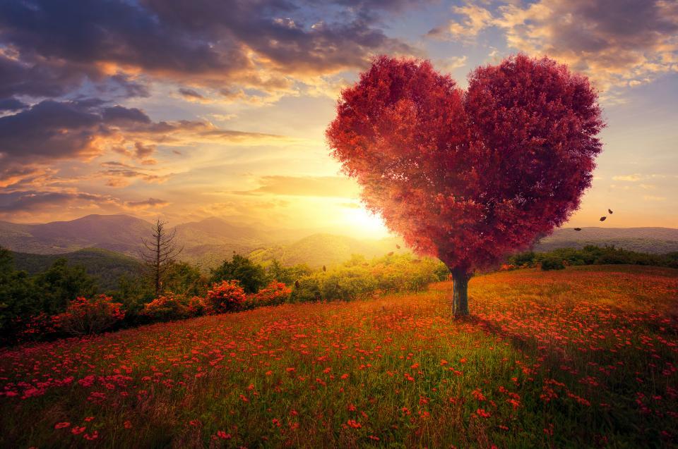 сърце дърво природа