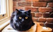 Котка скочи от петия етаж, за да се спаси и е невредима (видео)
