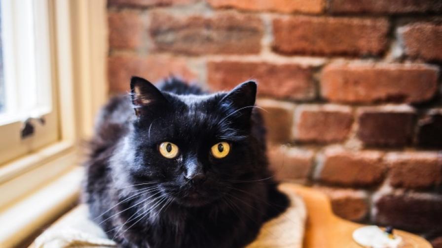 Котка скочи от петия етаж и се спаси (видео)