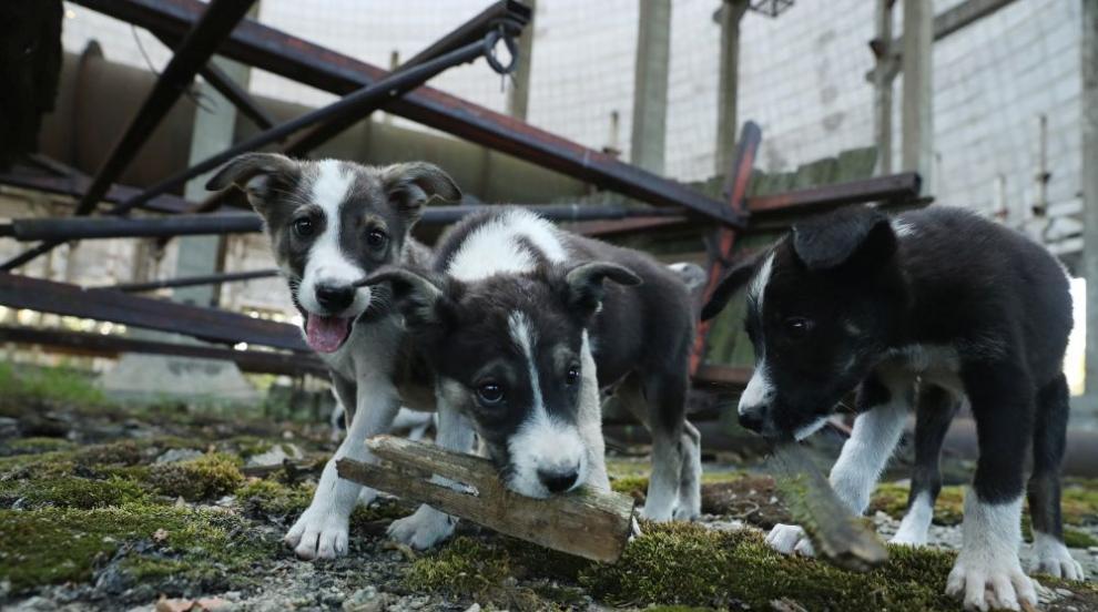 Как кучетата манипулират стопаните си?