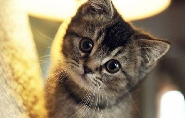 Котенцето