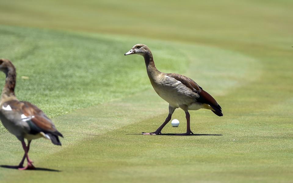 на голф турнир