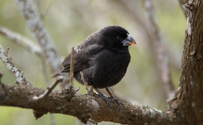 Учени откриха птици, които еволюират в нов вид