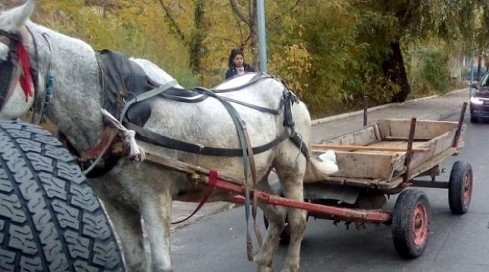 Каруца, управлявана от пиян водач, причини катастрофа край Стара Загора