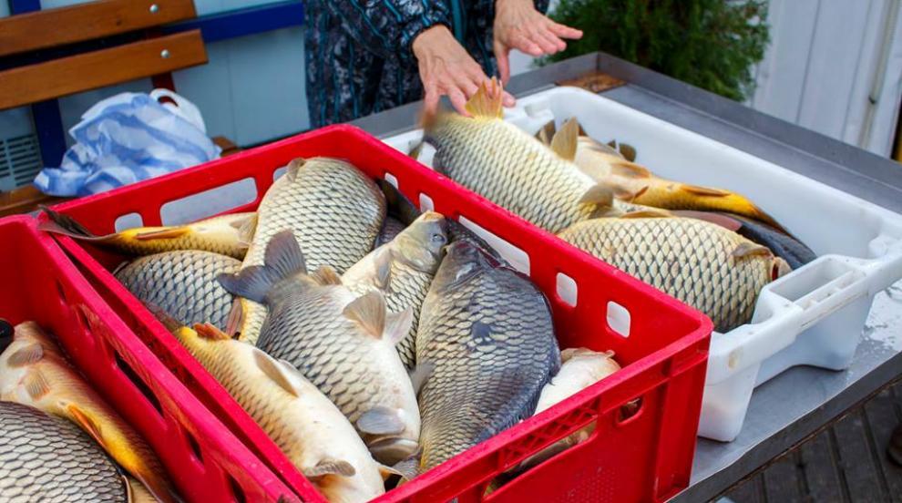 Как се избира риба за Никулден?