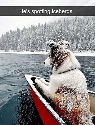 Той гледа за айсберги.