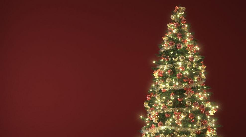 Как да рециклираме коледната си елха след празниците?