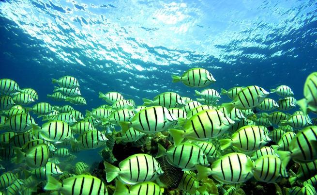 Световният океан може да се окаже празен след половин век.