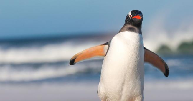 Гледачите в Лондонската зоологическа градина спасиха малко пингвинче, след като