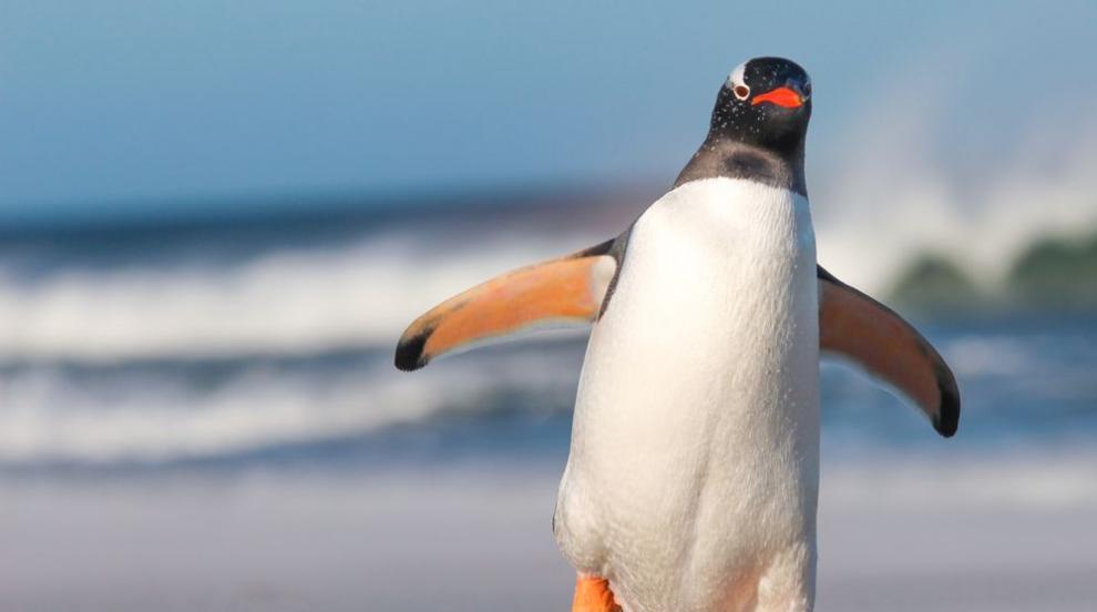 Сини пингвини нападнаха суши бар въпреки предупреждение от полицията