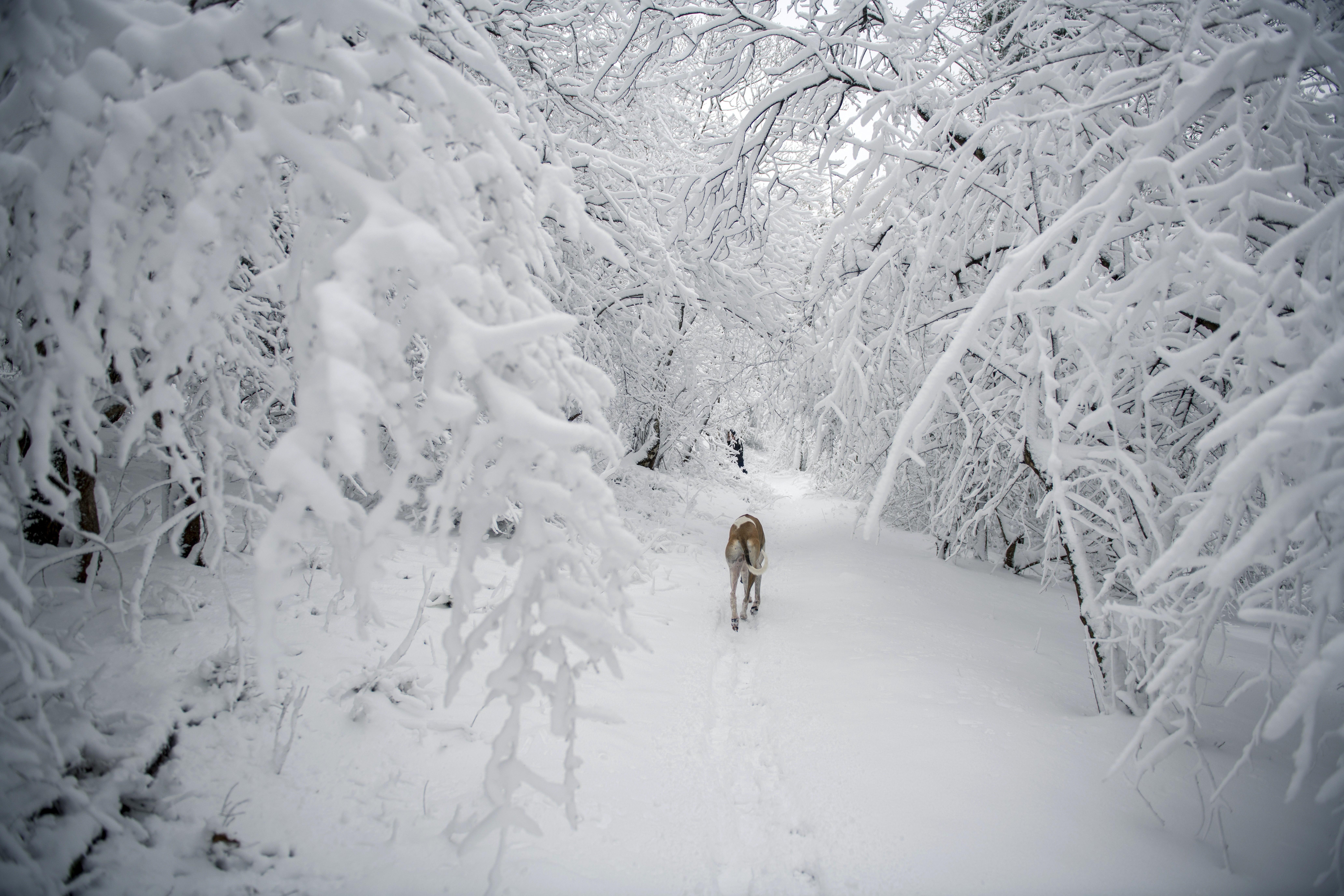Обичат ли кучетата снега