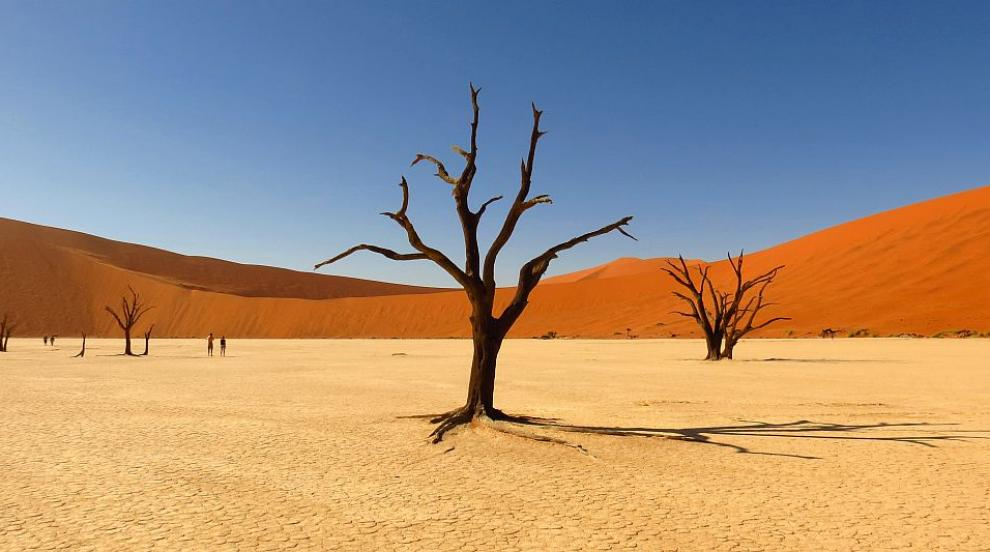 Жена оцеля след 12 дни в пустинята