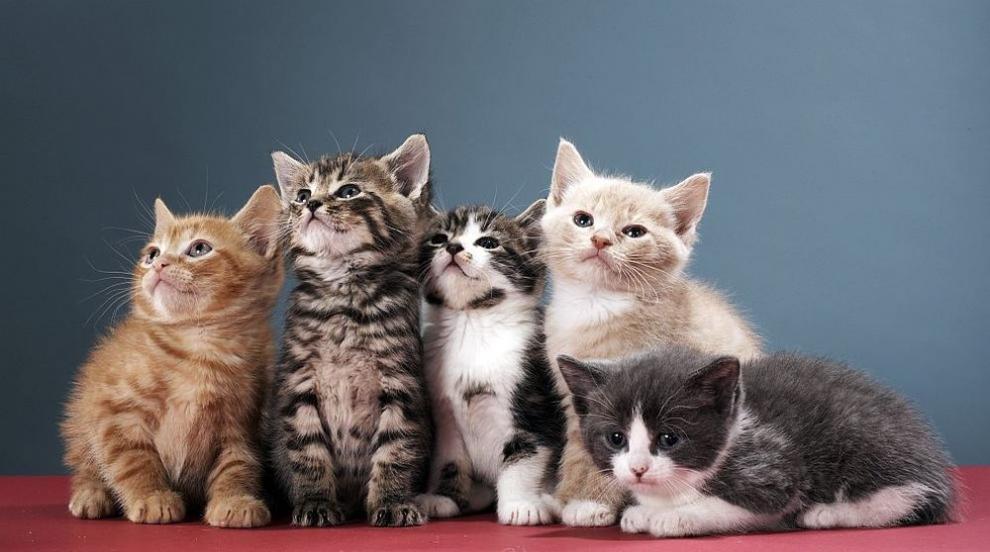 Котките удължават живота ни (ВИДЕО)