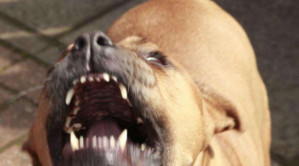 Питбул нахапа жена и кучето й във Врана (ВИДЕО)