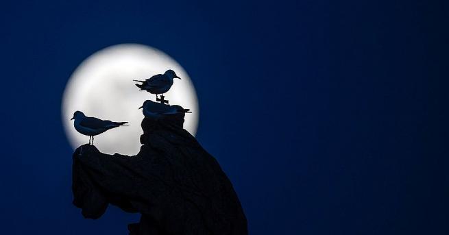 """Тази нощ звездобройците се насладиха на """"супер снежна луна"""". В"""