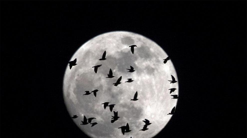 Синя Луна ще изгрее в нощта на Хелоуин