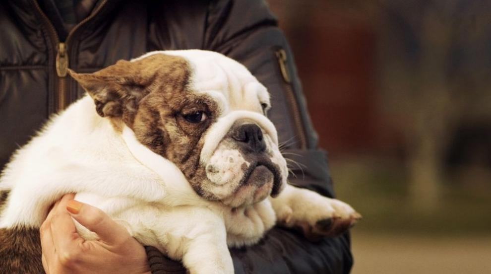Затлъстелите кучета и хора си приличат