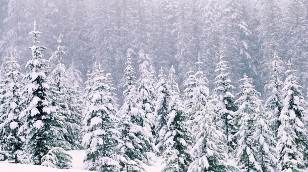Жълт код за снеговалежи и силен вятър в почти цялата страна в неделя