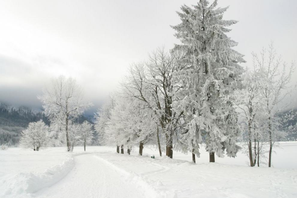 зима сняг