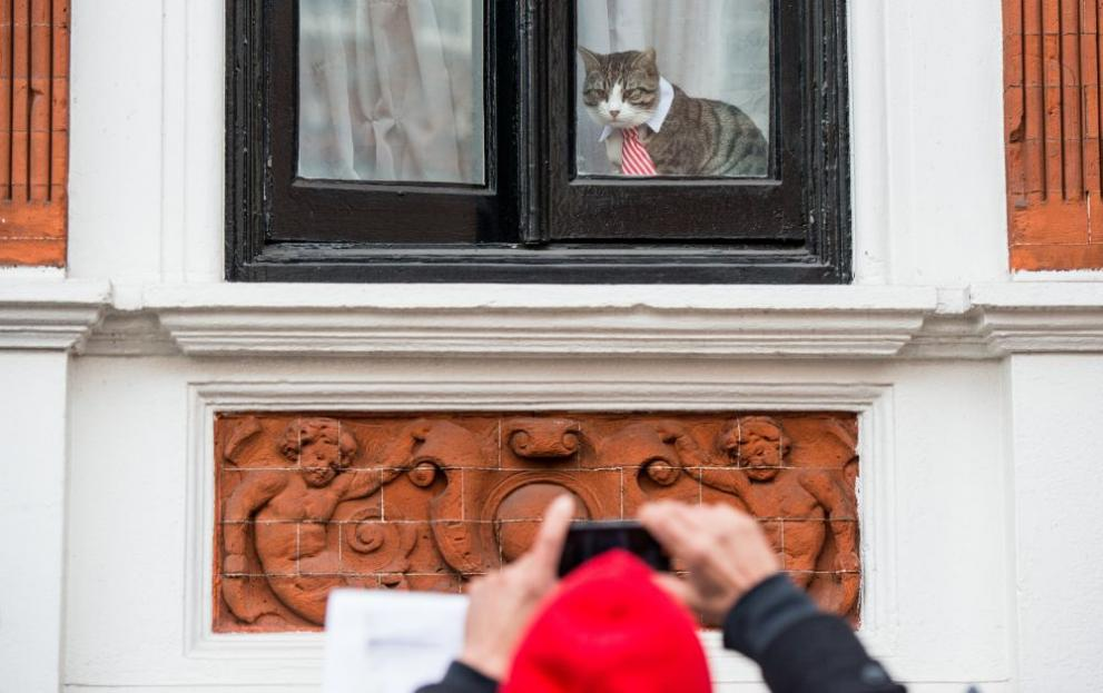 Елегантната котка на Джулиан Асандж