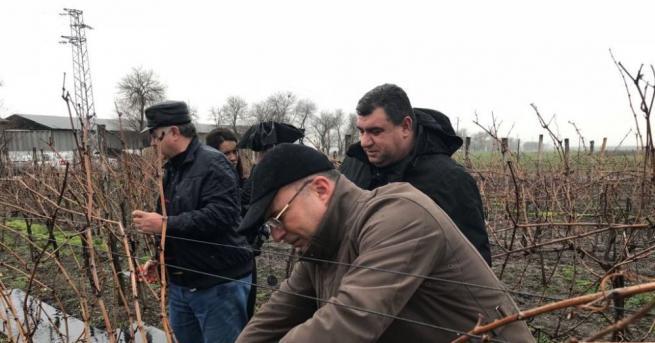 Продължава лозаро-винарската програма, по която ще бъдат отпускани по около