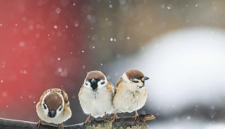 Зима и студ до края на февруари, в началото на март ни чака рязко затопля ...