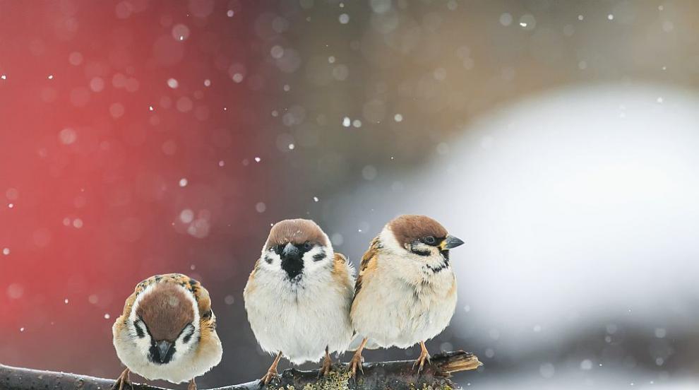 Зима и студ до края на февруари, в началото на март ни чака рязко затопляне