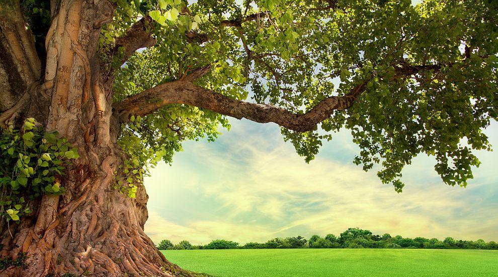Най-самотното дърво на Земята разкрива кога е започнал  антропоценът