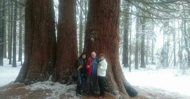 Любителят-търсач на вековни дървета, Роб Макбрайд остана силно впечатлен от