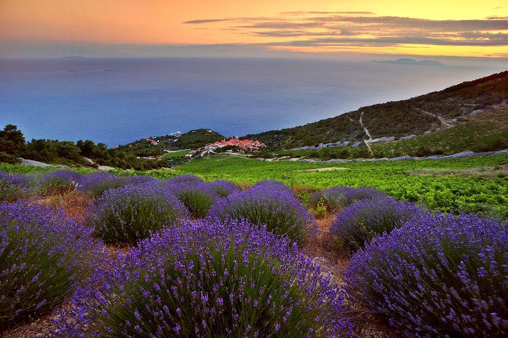 <u><strong>Хвар, Хърватия </strong></u><br> <br> Той е известен със своите лавандулови полета, както и със Стари град, който е част от списъка на ЮНЕСКО за световно културно наследство. Тук моделът за отглеждане на маслинови дървета, създаден от ранните гръцки колонисти, е перфектно запазен през вековете. Някои от най-добрите вина на страната се произвеждат на Хвар.